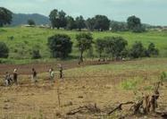 Agrocarburants et accaparements de terres en Guinée : conséquences de la politique énergétique de l'UE | Questions de développement ... | Scoop.it