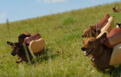 "Super Bowl ad features adorable weiner dogs tackling condiments | Buffy Hamilton's Unquiet Commonplace ""Book"" 