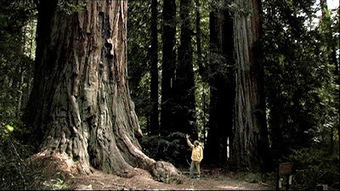 Carl Jung Depth Psychology: Sometimes a tree tells you more than can be read in books. | Carl Jung Depth Psychology | Scoop.it