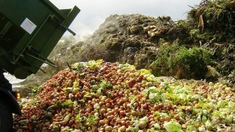 Agro-industry seed 'waste' is promising source of oils and ingredients - NutraIngredients.com | Agricultural & Horticultural Industry News | Scoop.it