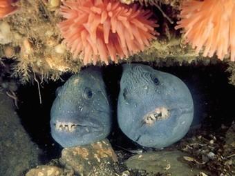 Deep-Sea Creature Photos -- National Geographic | Deep Ocean Biome | Scoop.it