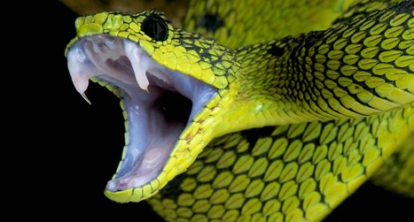 Snakes are 70 million years older than scientists previously thought | Amazing Science | Scoop.it