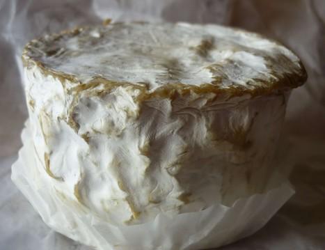 Des tartines au chaource pour le bonheur des papilles   The Voice of Cheese   Scoop.it