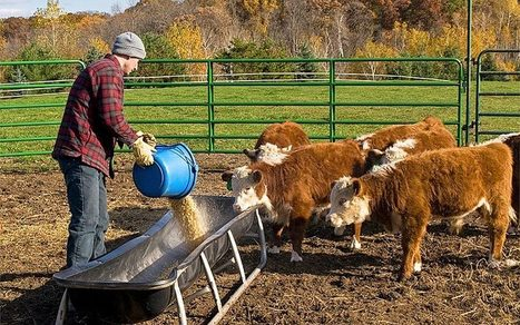 Leaps and Bounds: The Exploding Demand for non-GMO Animal Feed | Searching for Safe Foods | Scoop.it