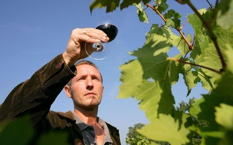 French wine: a cheat's guide to holiday drinking | Vitabella Wine Daily Gossip | Scoop.it
