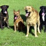 Dog Science Fair Ideas | eHow | gad&tocs | Scoop.it