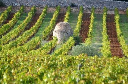 Depuis 2011, le fisc reluque les vins de Provence | Le vin quotidien | Scoop.it