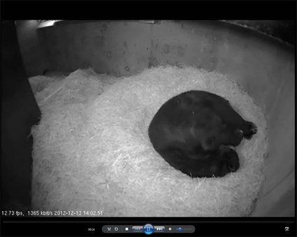 Andean Bear Cam - National Zoo| FONZ | Witchcraft | Scoop.it
