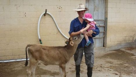 Queensland dairy farmers still quitting because of milk price wars   Cattle Industry   Scoop.it