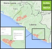 Criticism of GAR and Wilmar African oil palm projects highlight global 'no-deforestation' challenges | Daraja.net | Scoop.it
