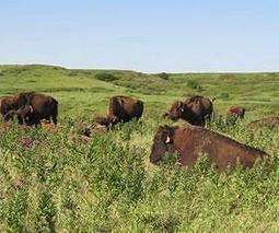 CU-Boulder-led team gets first look at diverse life below rare tallgrass prairies | Sustain Our Earth | Scoop.it