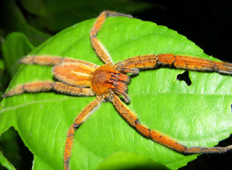 Spiders glide to safety   Communicating Science   Scoop.it