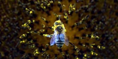 En quoi la biodiversité est-elle un enjeu d'avenir? | Nouvelles Tendances Mondiales | Scoop.it