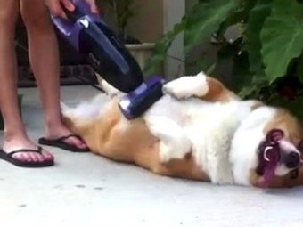 These animals having fun with vacuums will make your day | up2-21 | Scoop.it