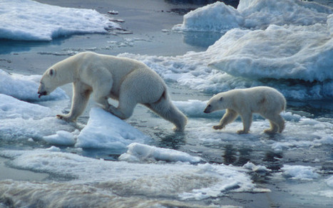 Animals Shrink as Earth Warms | global warming effects on animals | Scoop.it
