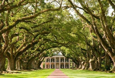 13 Enchanting Tree Tunnels You Need To Walk Through | Oak Alley Plantation: Things to see! | Scoop.it