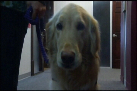 Therapy Dogs Change Lives in the Coastal Bend - KZTV Action 10 News | Dogs Gone Wild | Scoop.it
