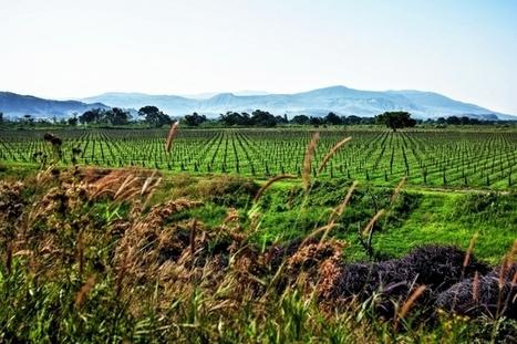 Les hippopotames dans les vignes | Le Vin et + encore | Scoop.it