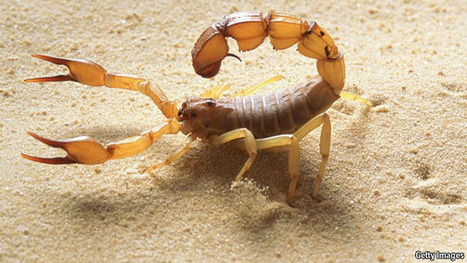 Scorpions May Have Lessons to Teach Aircraft Designers | Biomimetics | Scoop.it