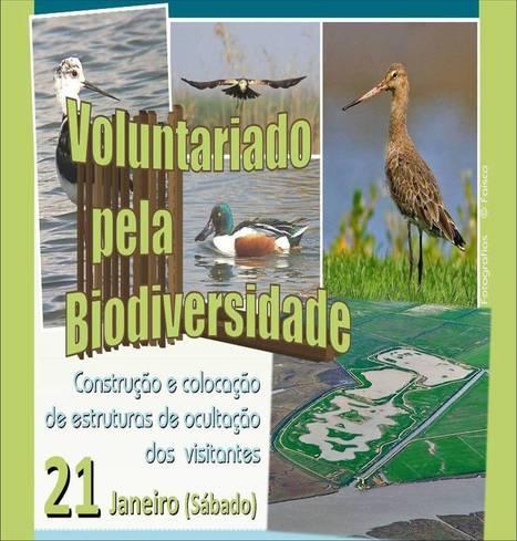 EVOA - Espaço de Visitação e Observação de Aves: Voluntariado | Vila Franca de Xira | Scoop.it