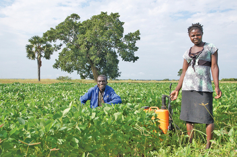 Can conservation agriculture save Africa's soils? - Manitoba Co-operator | Climate Smart Agriculture | Scoop.it