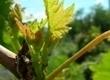 Salon des Vignerons indépendants de Strasbourg | Agenda du vin | Scoop.it