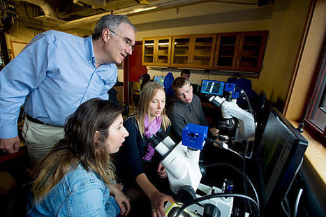 Fresh approaches in teaching - Harvard Gazette | collaborative teaching and learning | Scoop.it
