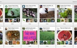 ECOMMERCE - Leveraging Pinterest for SEO and E-commerce | Pinterest for Business | Scoop.it