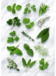5 Herbs Every Diabetic Must Know! - Greenchedy | Herbs And Herbal Remedies | Scoop.it