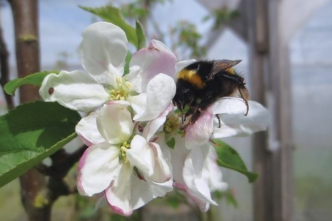IPI funded: First direct evidence of impact of pesticide on bee pollination | BIOSCIENCE NEWS | Scoop.it