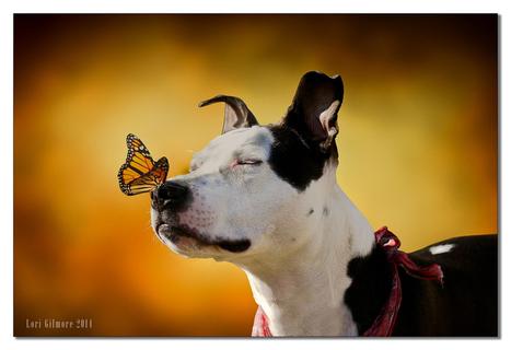 50 Breathtaking Photographs of Butterflies | Jaclen 's photographie | Scoop.it