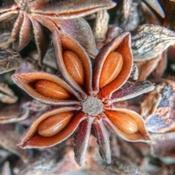 Comment utiliser l'anis étoilé en phytothérapie ? | Huiles essentielles HE | Scoop.it