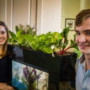 AquaSprouts — Home Aquaponics System For Beginners - CleanTechnica | Wellington Aquaponics | Scoop.it