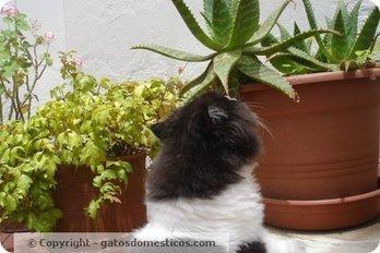 Plantas tóxicas para los gatos   Gatos domésticos   Cajón de sastre   Scoop.it