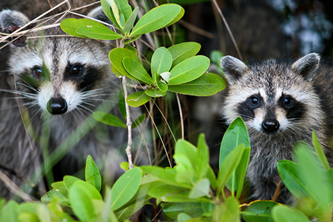 Urge Congress to End Cruel Trapping on National Wildlife Refuges | Introduce new course in schools called COMPASSION | Scoop.it