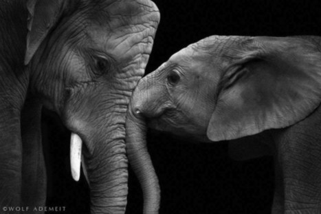 Expressive Animal Portraits by Wolf Ademeit | Coolphotos | Scoop Photography | Scoop.it