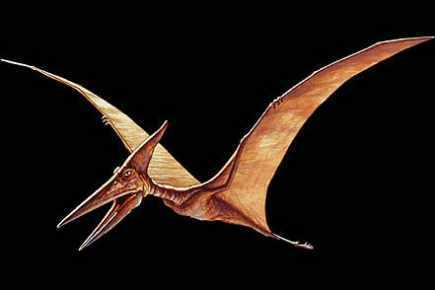 Les oeufs du ptérosaure de type plus reptilien qu'aviaire   Planet Techno Science   Aux origines   Scoop.it