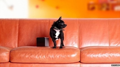Puppy Surveillance as New Tech Lets Owners Keep Tabs on Dogs | Feed | Scoop.it