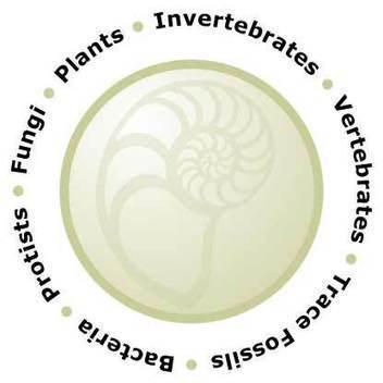 The Paleontology Portal   Transliterate   Scoop.it
