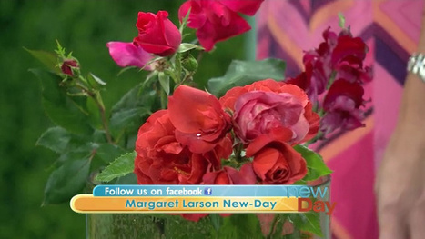 Keep plants blooming into fall - KING5.com | Back Yard Gardening | Scoop.it