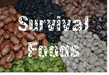 Ultimate Guide: 131 Survival Foods | Permaculture, Environment, & Homesteading | Scoop.it