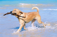 Pets really do provide health benefits | Puppies and Dogs | Scoop.it