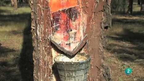 El bosque protector - Resina: una industria actual, El bosque protector - RTVE.es A la Carta   Limpiadores de uso general   Scoop.it