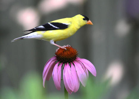 How to Make a Bird-Friendly Sanctuary | Our Evolving Earth | Scoop.it