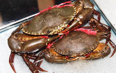Madagascar : Les crabes de mangrove, nouvelle filière d'avenir ... | Ny Rado Rafalimanana - Madagascar | Scoop.it