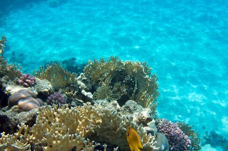 Les coraux résistent mieux que prévu à l'acidification | Agua | Scoop.it