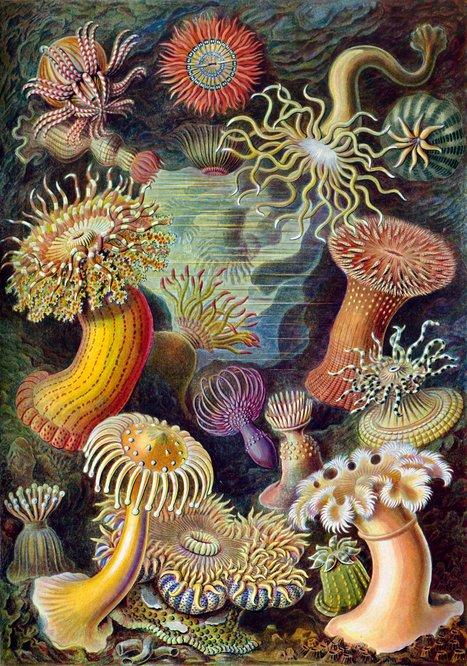 El antipapa que alejó la ciencia de Dios para acercarla al arte | Educacion, ecologia y TIC | Scoop.it