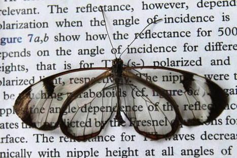 Les ailes du papillon Greta Oto pourraient aider à développer des écrans sans reflet | EntomoNews | Scoop.it