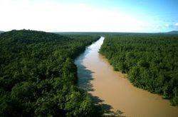 Guyane: quand l'or ruine la biodiversité - Journal de l'environnement (Abonnement) | Chronique d'un pays où il ne se passe rien... ou presque ! | Scoop.it