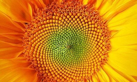 DAILY MAIL: Sunflower citizen science project carries on the work of  Alan Turing | University of Manchester in the news | Scoop.it